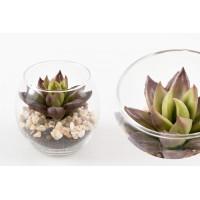 Maceta redonda cristal cactus verde 8 cm