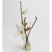 Magnolia Campbelli Eau 16 cm en vaso de cristal