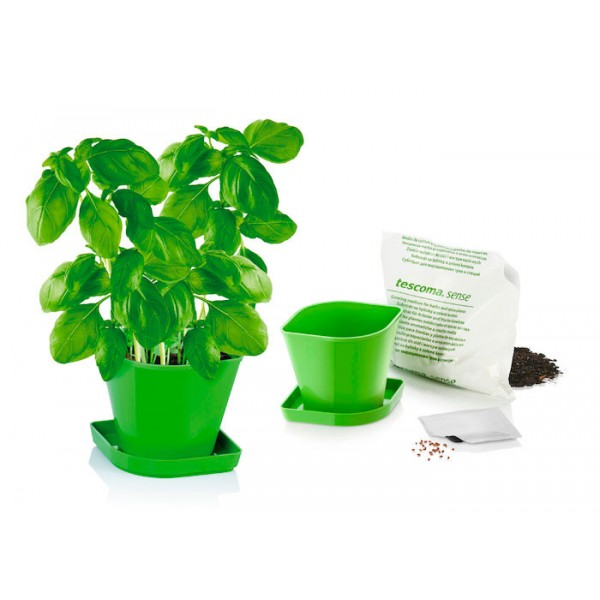 Juego kit para cultivar hierbas aromáticas Albahaca Sense