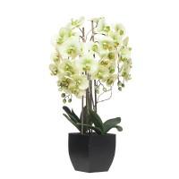 Orquídea verde con hojas artificiales Phalaenopsis maceta plástica negra 76h cm