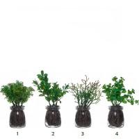 Planta artificial aromática en maceta cristal 4 modelos 6x17h cm